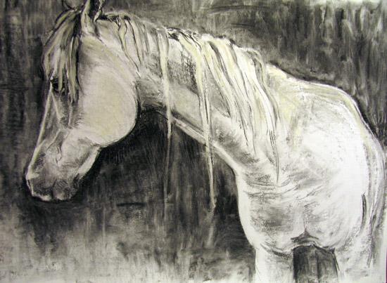 white horse wit paard