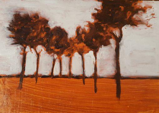 bomen boven het maaiveld